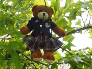 Bodwell Bears Photo Contest 2015 (10)