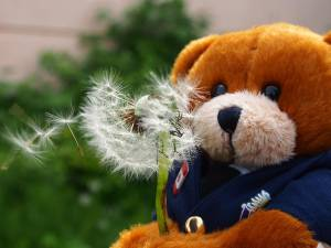 Bodwell Bears Photo Contest 2015 (12)