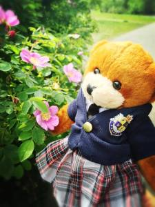 Bodwell Bears Photo Contest 2015 (20)