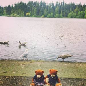 Bodwell Bears Photo Contest 2015 (33)