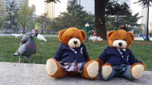 Bodwell Bears Photo Contest 2015 (64)
