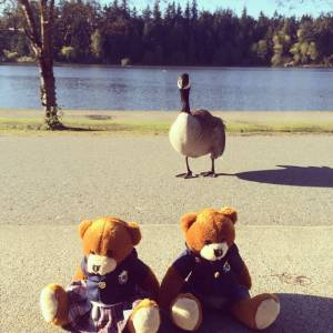 Bodwell Bears Photo Contest 2015 (79)